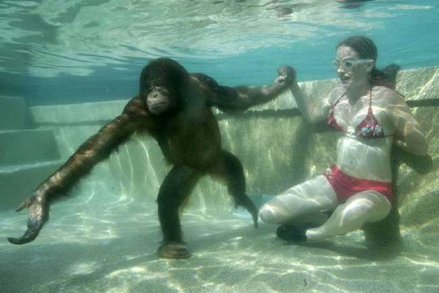 Aquatic Ape
