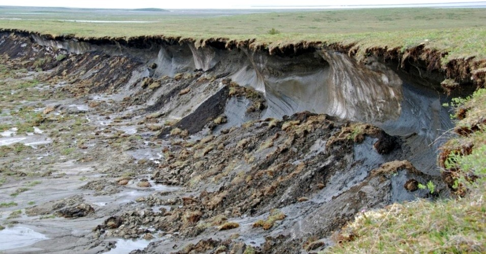 Melting permafrost in the Northwest Territories sends carbon-rich sediment into the Mackenzie Delta. (Photo- Charles Tarnocai/Agriculture and Agri-Food Canada)-1