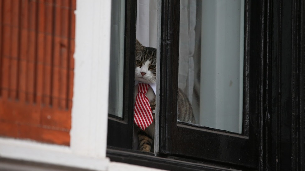 The Embassy Cat is watching you. ©  AFP : Daniel Leal-Olivas